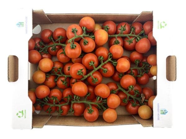 Cherry Cocktail Tomaten Rote Perle aromatisch und saftig 3700g XXL Kiste