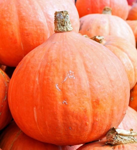 Halloween Hokkaido Kürbis ca 2Kg schwer und 15cm hoch