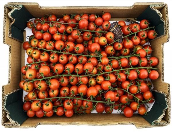 Cherry Cocktail Tomaten aromatisch und saftig 3000g XXL Kiste