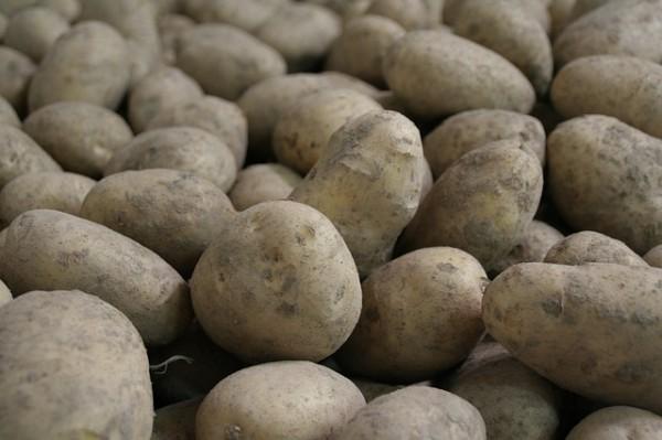 Deutsche Cilena Kartoffeln festkochend neue Ernte 10 Kg Sack